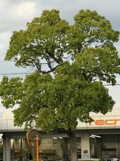 葉つき木.jpg